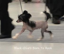 black_divas_born_to_rock_p